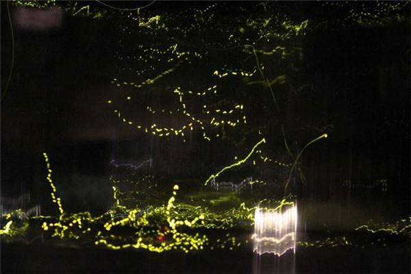 """""""萤火虫主题公园""""将于本月27日亮相武汉东湖"""