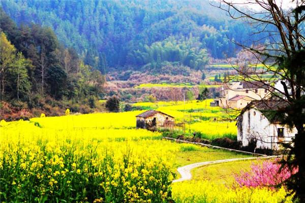 李金早:大力发展乡村旅游共建共享模式