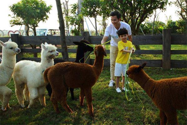 """萌宠乐园_室内萌宠乐园,""""以小带大""""家庭经济新引擎_动物园策划_动物园 ..."""
